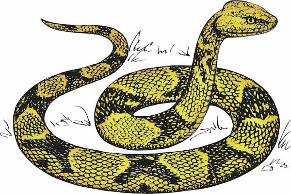 Kung Tone snake